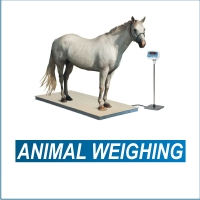 animal-weighing-thumbnail